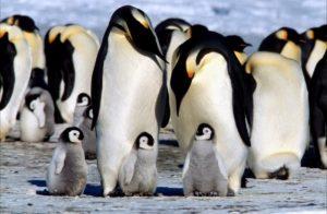 los-pinguinos-3