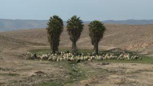 oasi-pastore